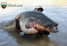 Рибари уловиха 125 кг сом край Русе