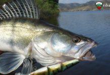 Схеми за лов на бяла риба