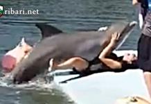 Делфин почти облада жена