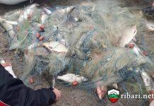 70 килограма риба спасена от бракониери край Севлиево от ЦРОО