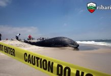 Замърсяването убива Китове и делфини