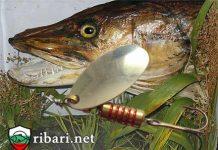 Тънкости за риболов на големи хищници!
