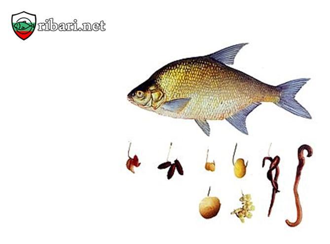 Риболов на Платика