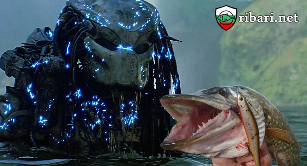 Когато хищник е на риболов за хищник