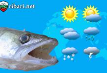 Климатични особености при кълве бялата риба?