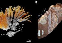 Вкаменелости на риби показват интересни факти днес!