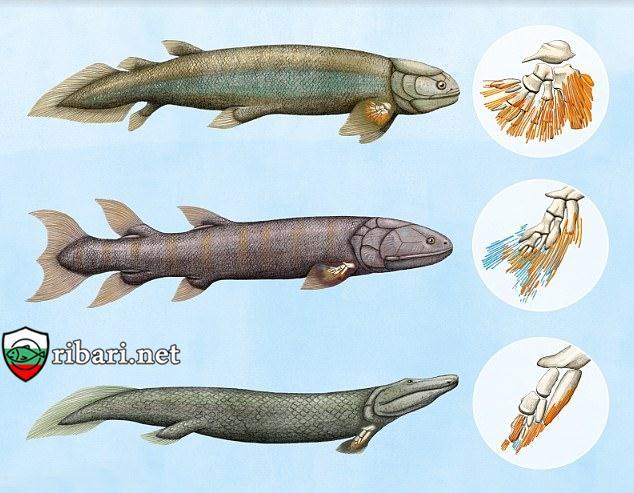 Вкаменелости на риби