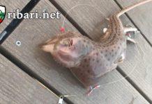 Хванаха странно морско чудовище с пипала и муцуна на опосум + ВИДЕО