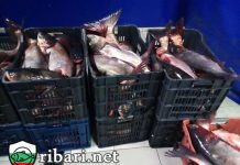 Над тон и половина риба бе конфискувана от ИАРА