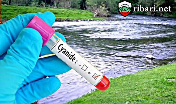 Установено е замърсяване на реките Чая и Юговска с цианиди
