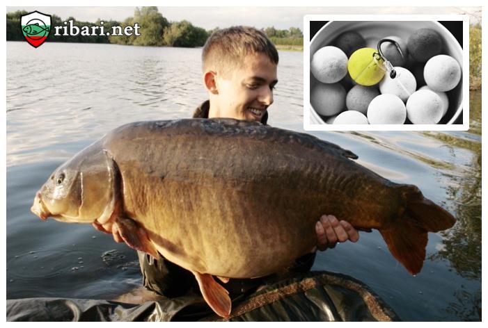 Алтернативна стръв – тактика за риболов - Риболов на шарани в България