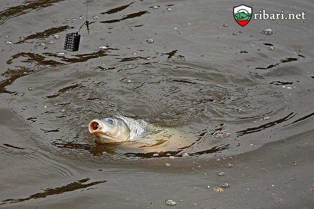На риболов в Сърбия