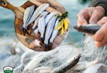 Риболовът е хоби, не начин на препитание
