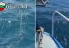 Над 1 км мрежи бяха извадени от водите на Черно море