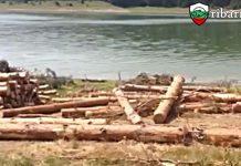 Забраниха за една година сечта около някои реки, язовирите и езерата