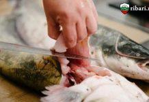 8,7 млн. лв. за българските рибари
